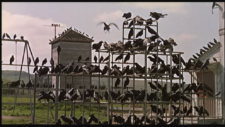 "Bird Watching: 5 Iconic Images From Hitchcock's ""The Birds ..."