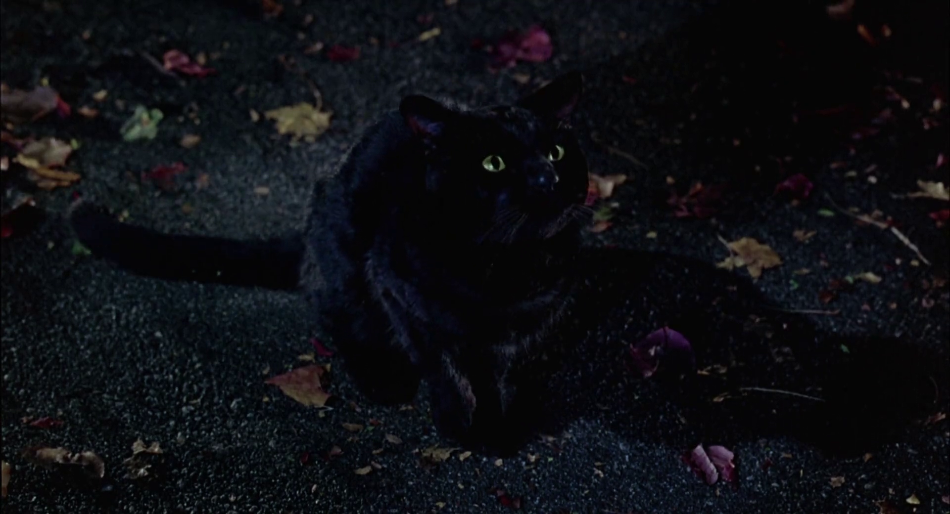 What Is The Name Of The Cat In Hocus Pocus