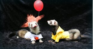 Pennywise the Ferret